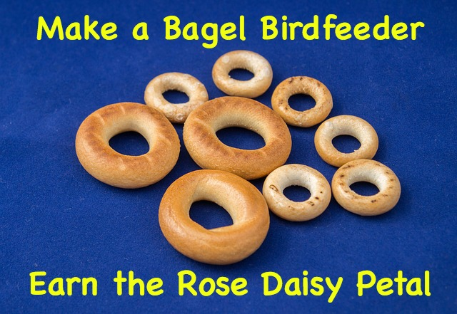 How to earn the rose Daisy petal by making a bagel bird feeder