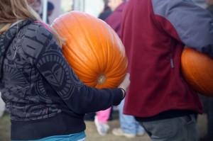 pumpkins-487979_640